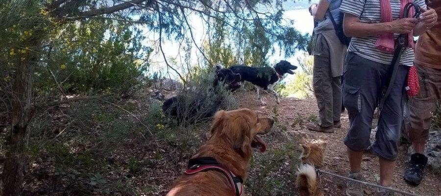 randonnées canines par Dog Ethik