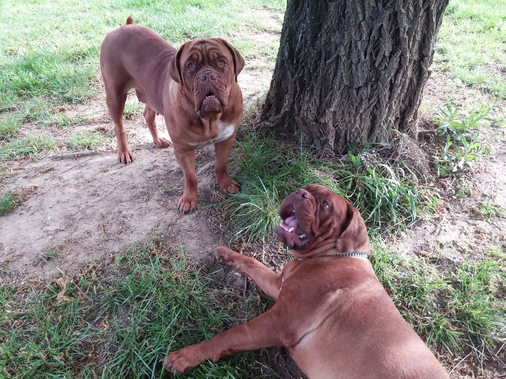 remplacement en élevage canin par Dog Ethik
