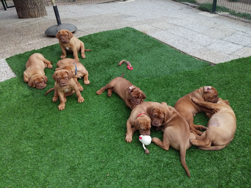 Pension familiale canine Dog Ethik