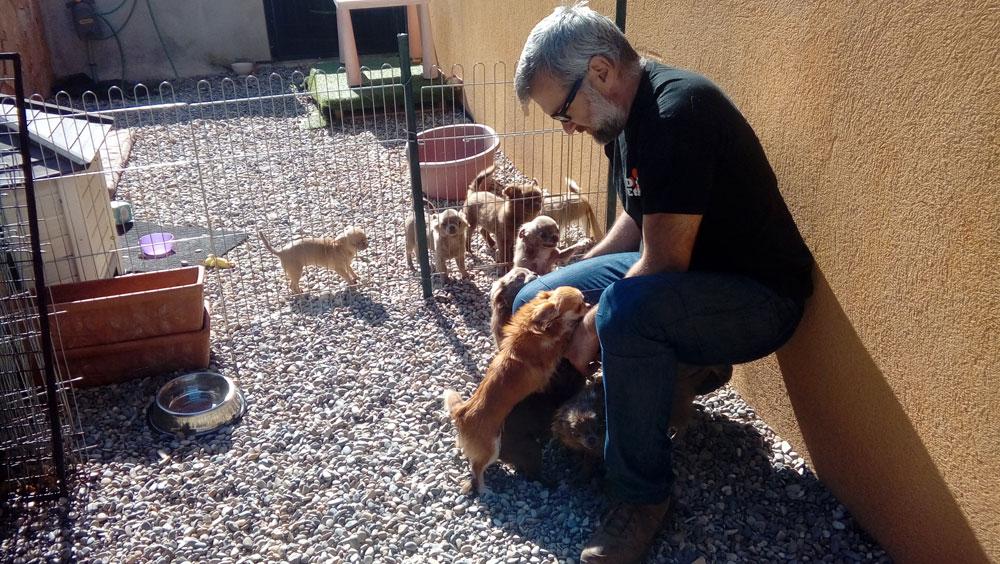 Dog Etik propose le remplacement en élevage canin pendant vos congés