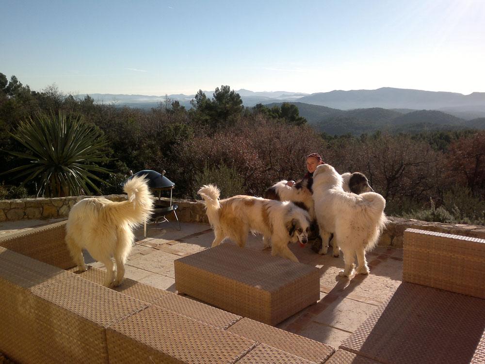 Dog Ethik vient visiter vos animaux chez vous en votre absence.