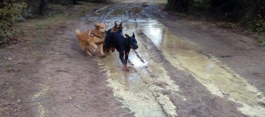 Les balades canines de Dog Ethik