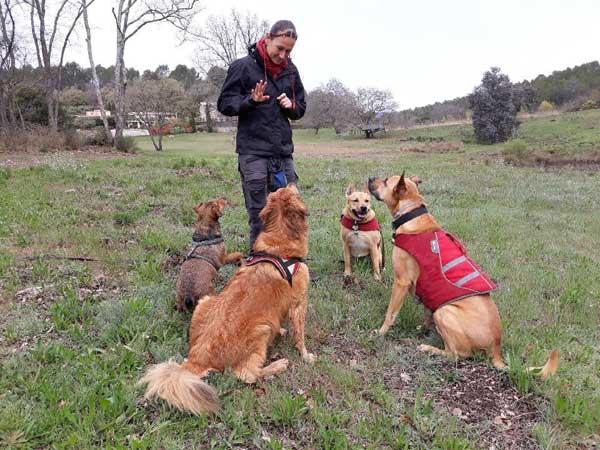 Les cours collectifs de Dog Ethik