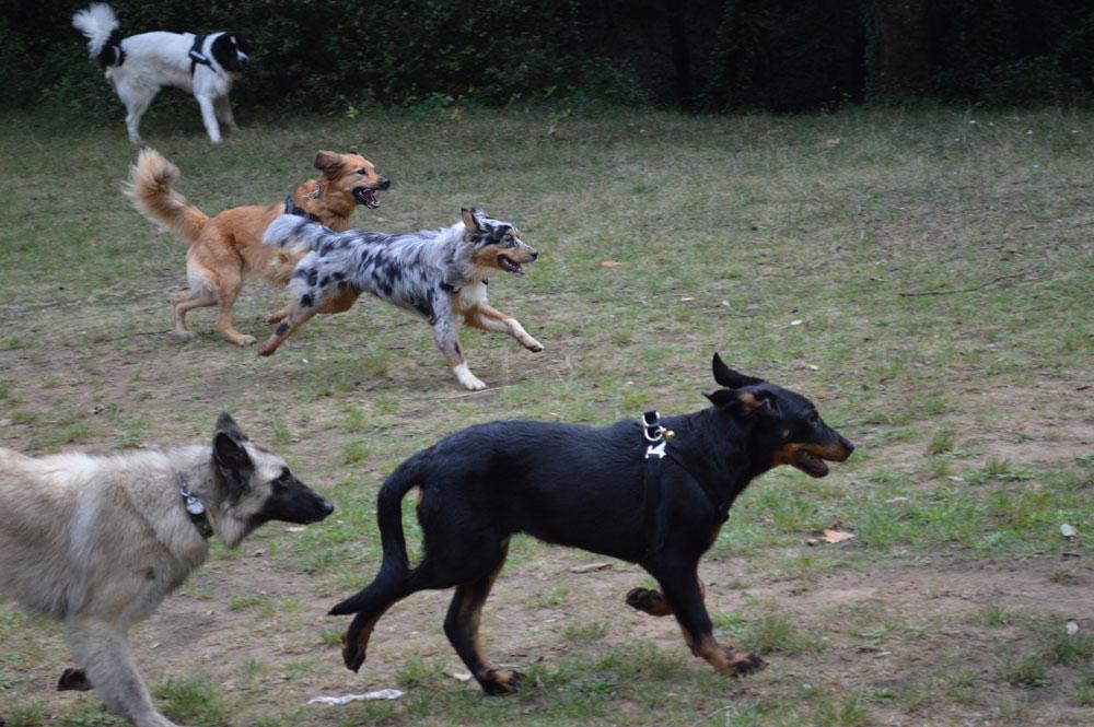 Randonnée collective pour éducation canine par Dog Ethik