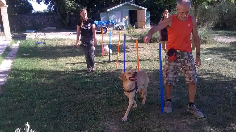 Cours individuel d'éducation canine par Dog Ethik