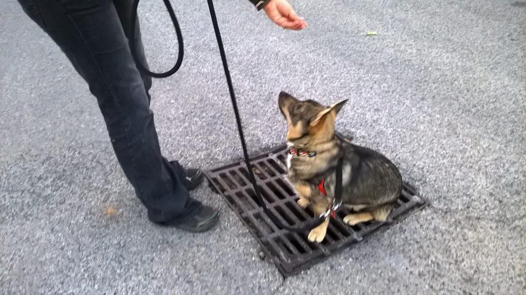 Dog Ethik, leçons individuelles