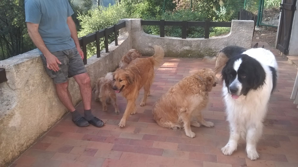 Pension familiale canine Dog Ethik