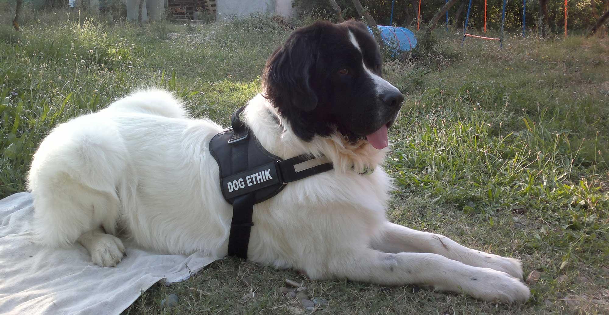 Guiness Dog Ethik