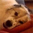 Java Dog Ethik